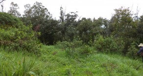 Land for Sale near Yunguilla