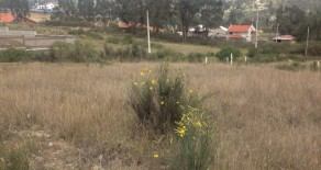 Land for Sale in Chaullabamba